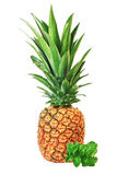 Fruit of the pineapple and mint. Stock Images