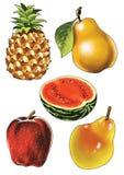Fruit pineapple pear apple water-melon. Berry stalk shank Stock Image