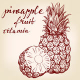 Fruit pineapple set hand drawn vector llustration sketch Stock Photography