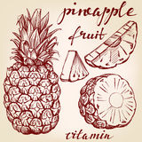 Fruit pineapple set hand drawn vector llustration sketch Stock Photo