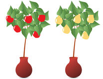 Fruit plant Stock Image