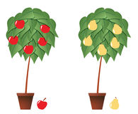 Fruit plant Royalty Free Stock Image