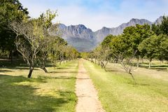 Fruit plantation in Franschhoek, South Africa stock images