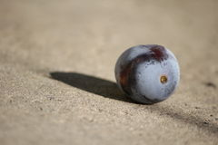 A fruit of plum Royalty Free Stock Photo