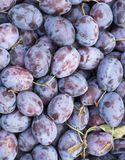 Fruit plums in big market Royalty Free Stock Image