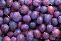 Fruit   plums  blue Royalty Free Stock Photos
