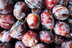 Fruit  plums  ripe Stock Images