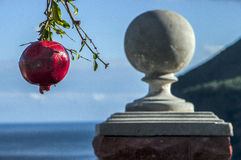 The fruit of a pomegranate in the seaside city. Of Crimea Royalty Free Stock Images