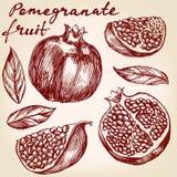 Fruit pomegranate set hand drawn vector illustration realistic sketch Stock Photos