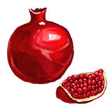 Fruit pomegranate vector illustration  hand drawn Royalty Free Stock Image