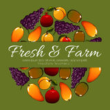 Fruit poster of vector fresh farm fruits harvest Royalty Free Stock Images
