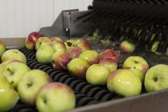 Washing apples in the fruit processing plant, close. Fruit processing plant, a modern fruit processing plant, apples in the foreground, apples in the package stock photography