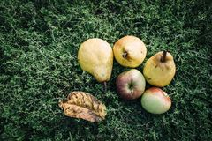 Fruit, Produce, Local Food, Apple royalty free stock photography