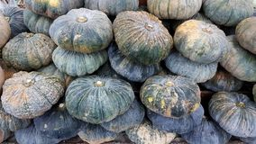 Pile of pumpkin at market royalty free stock images