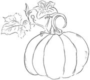 Fruit of the pumpkin Royalty Free Stock Photos