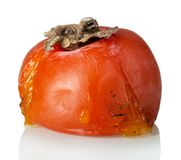 Fruit putréfié corrompu de kaki d'isolement sur le blanc photographie stock libre de droits