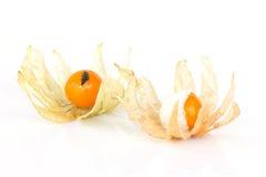Fruit putréfié de physalis (coqueret comestible) Image stock