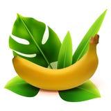 Fruit réaliste de banane du vecteur 3d avec des feuilles d'isolement sur le fond blanc Illustration de vecteur Photographie stock libre de droits
