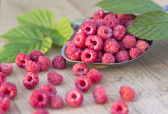 Fruit raspberries and green leaf Royalty Free Stock Images