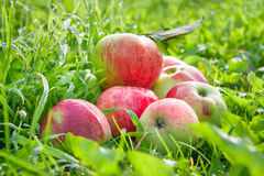 Fruit red apples on a  green grass Stock Photo