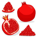 Fruit red pomegranate Stock Image