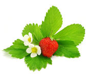 Fruit of red strawberry isolated Stock Images