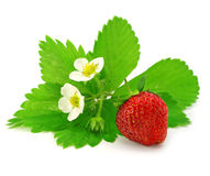 Fruit of red strawberry isolated Royalty Free Stock Photo