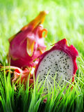 Ripe dragon fruit on green grass Royalty Free Stock Photo