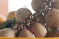 Fruit rot Stock Photos