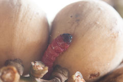 Fruit rot Stock Images