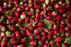 Fruit rouge Photo libre de droits