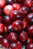 Fruit rouge de canneberge Photo stock