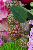 Fruit rouge et vert de framboise entre les fleurs Image libre de droits