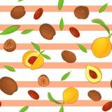 Fruit sans couture d'épice de noix de muscade de modèle de vecteur Fond rayé avec des écrous dans la coquille, entier, écossée, f Image stock