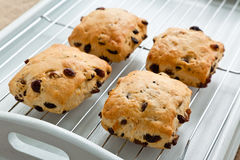 Fruit scones on a cooling tray Royalty Free Stock Photo