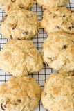Fruit Scones Fresh and Hot on a Cooling Rack Royalty Free Stock Photo