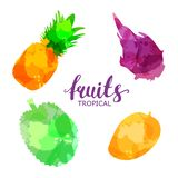 Fruit set drawn watercolor blots and stains with a spray pineapple, mango, dragon fruit, durian.Isolated eco natural food vector stock illustration
