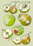 Fruit set hand drawn apples and pears. Royalty Free Stock Photo