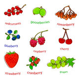 Fruit set with texture Stock Photography