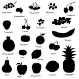 Fruit set (vector) Royalty Free Stock Photography