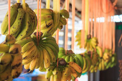 Fruit shop. Banana selling in island, thailand Stock Images