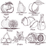 Fruit sketch 1 Royalty Free Stock Image