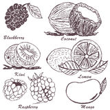 Fruit sketch 3. Collection of fruit sketches - part 3 Royalty Free Stock Images