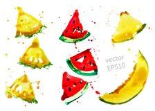 Fruit slices set Stock Image