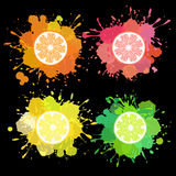 Fruit splash with lemon, lime, orange, grapefruit Royalty Free Stock Photo
