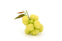 Fruit Star gooseberry and leaves isolate on white background Stock Photography
