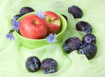 Fruit still life with chicory, apples, plums Stock Images