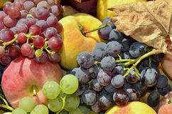 Fruit stored. Various types of fruit stored in wooden crate on chair outdoors Stock Photos