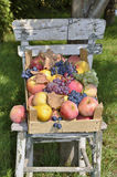 Fruit stored Stock Photos