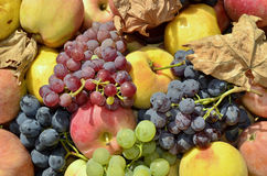Fruit stored. Various types of fruit stored in wooden crate on chair outdoors Royalty Free Stock Image